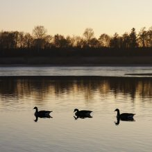 waterfowl hunting safety